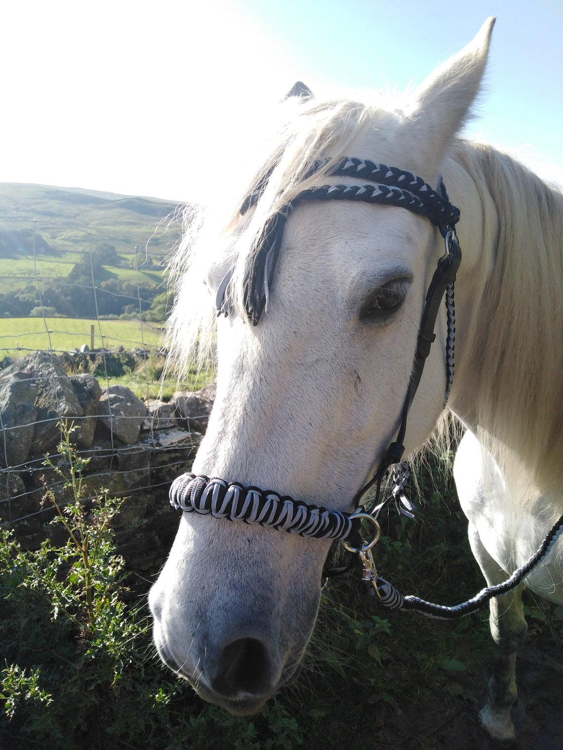 BuckYou Perfect Fit Fully Adjustable Black and Silver Rope and Biothane Sidepull bitless Bridle and reins!